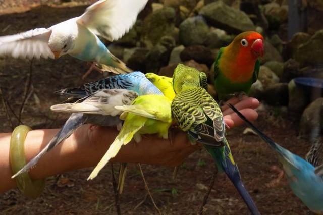 cho chim ăn tai vườn thú Zoodoo