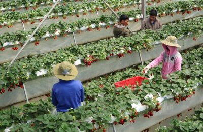 Dalat Farm Tour