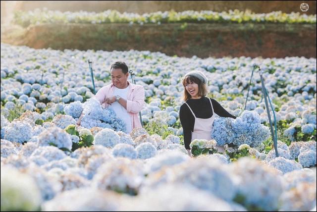 Hydrangea Flower Field